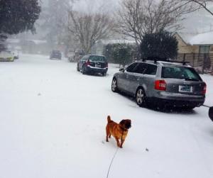 berney on snowy st.